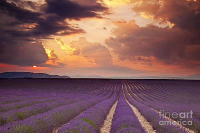 Photograph - Lavender Sunset by Brian Jannsen