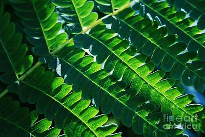 Photograph - Leaves Of Green  by Neal Eslinger