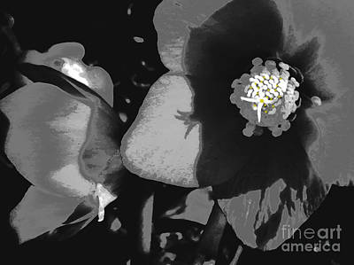 Photograph - Lenten Rose In Shades Of Black And White by Patricia Januszkiewicz