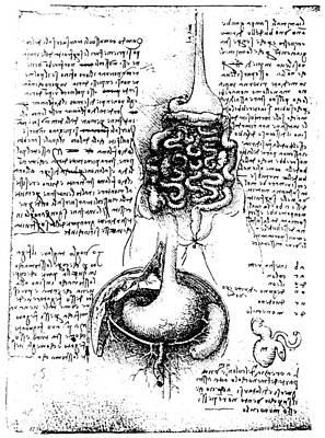 Photograph - Leonardo: Anatomy by Granger