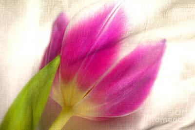 Linen Tulip Art Print by Bobbi Feasel