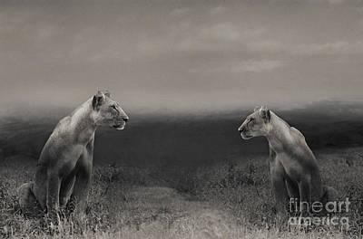 Antlers - Lions by Christine Sponchia