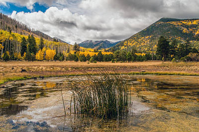 Photograph - Lockett Meadow by Tam Ryan