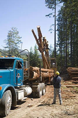 Photograph - Logging by Jim West