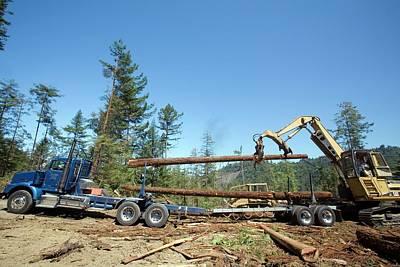 Logging Photograph - Logging Redwood Trees by Jim West
