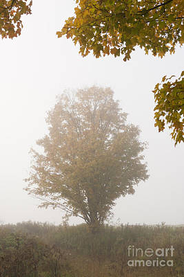 Amy Hamilton Watercolor Animals - Lone maple tree during fall foliage. by Don Landwehrle