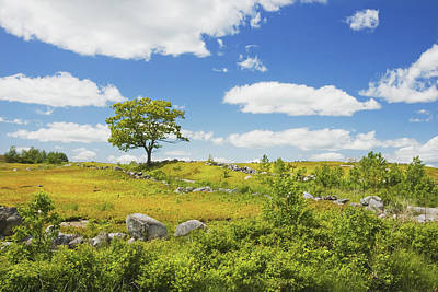 Maine Meadow Photograph - Lone Tree With Blue Sky In Blueberry Field Maine by Keith Webber Jr
