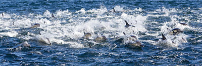 Long-beaked Common Dolphins Art Print by M. Watson