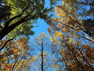 Photograph - Looking Up by Gene Cyr