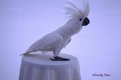 Umbrella Cockatoo Photograph - Looking by Wendy Fox