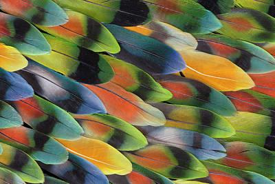 Lovebird Wall Art - Photograph - Lovebird Tail Feather Pattern And Design by Darrell Gulin