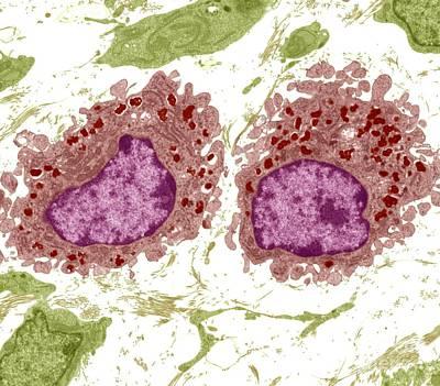 Macrophage Cells, Tem Art Print by Steve Gschmeissner