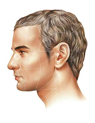 Male Body Photograph - Male Head by Asklepios Medical Atlas