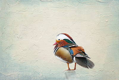 Flora Mixed Media - Mandarin Duck by Heike Hultsch