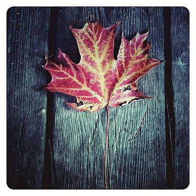 Maple Leaf Art Print by Natasha Marco