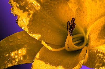 Mellow Yellow Art Print by Brian Stevens