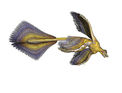 Flying Dinosaur Photograph - Microraptor Dinosaur by Friedrich Saurer