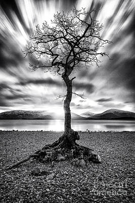 Brave Photograph - Millarochy Bay Tree Loch Lomond by John Farnan