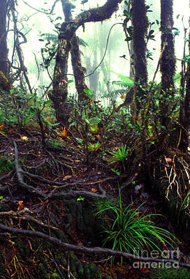 Verdant Digital Art - Misty Rainforest El Yunque by Thomas R Fletcher