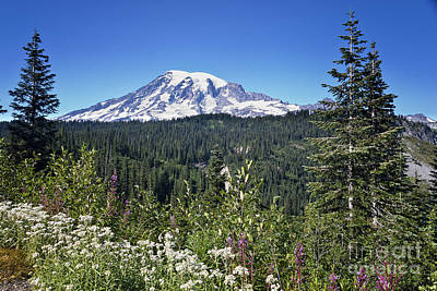 Photograph - Mount Ranier by Ronald Lutz