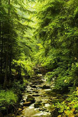Photograph - Mountain Stream by Jaroslaw Grudzinski