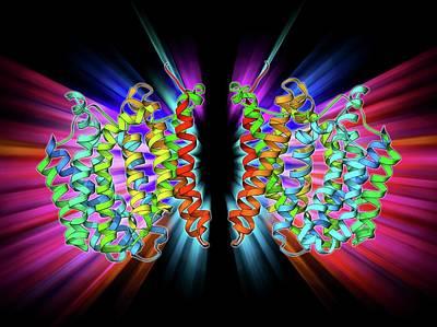 Multidrug Transporter Molecule Art Print