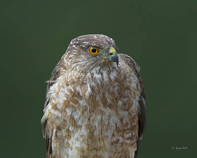 Photograph - My Best Side by Gerry Sibell