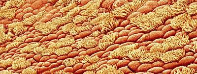 Nasal Lining Art Print