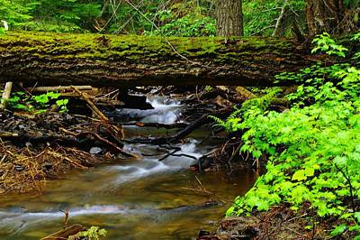 Forest Floor Photograph - Natural Bridge by Jeff Swan