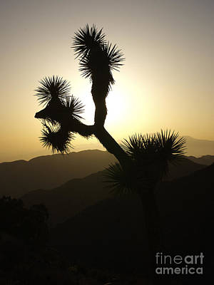 New Photographic Art Print For Sale Joshua Tree At Sunset Art Print