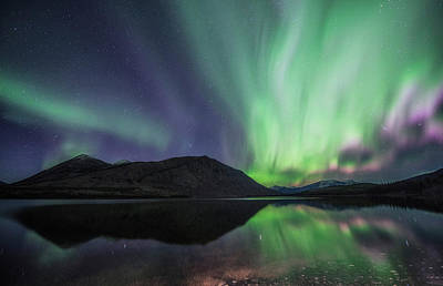 Photograph - Northern Lights, Carcross, Yukon by Jonathan Tucker