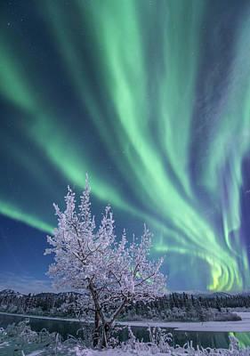 Photograph - Northern Lights, Yukon River, Yukon by Jonathan Tucker