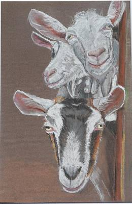 Pastel - 3 Nosey Goats by Teresa Smith