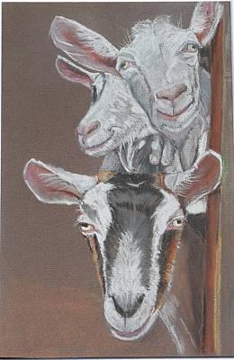 3 Nosey Goats Art Print