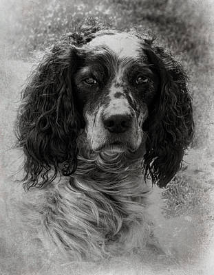 Photograph - Ochty by Fiona Messenger