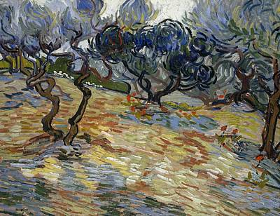 Post-impressionist Painting - Olive Trees by Vincent van Gogh