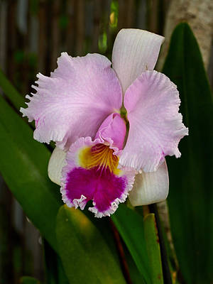 Photograph - Orchids by Jouko Lehto