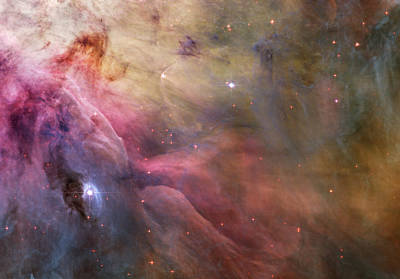 Photograph - Orion Nebula by Sebastian Musial