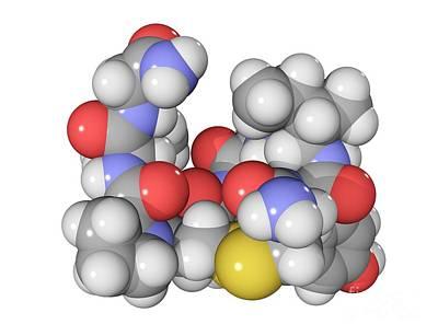 Oxytocin Neurotransmitter Molecule Art Print by Laguna Design