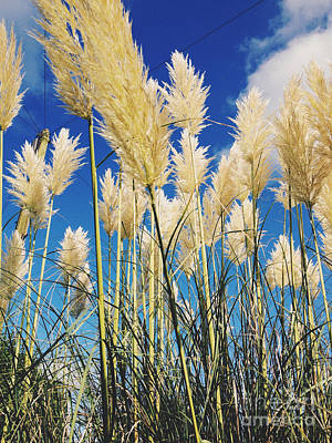 Blue Begonias Photograph - Pampas Grass And Blue Skies by Gemma Knight