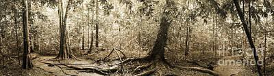 Panorama Of Rainforest Art Print