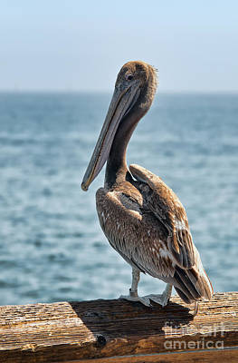 Photograph - Pelican Portrait by Eddie Yerkish