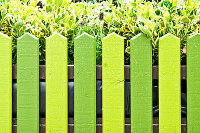 Picket Fence Art Print by Tom Gowanlock