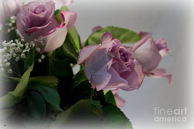 Photograph - 3 Pink Roses by Sandra Clark