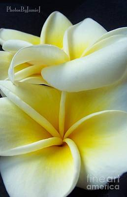 Photograph - 3 Plumerias Up Close by Jamie Johnson