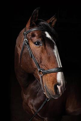 Photograph - Portrait Of A Lusitano Stallion by Jak Wonderly