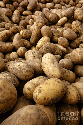 Potato Photograph - Potatoes by Olivier Le Queinec