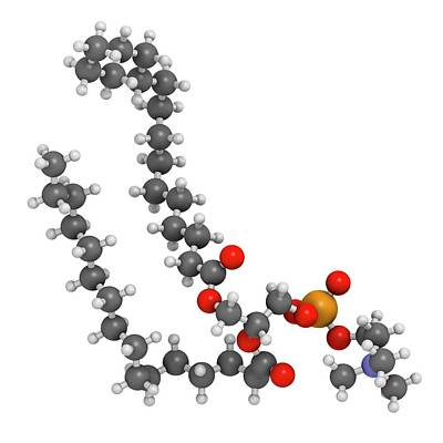 Tension Photograph - Pulmonary Surfactant Molecule by Molekuul