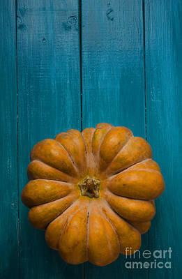 Farm Border Photograph - Pumpkin by Jelena Jovanovic