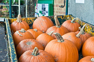 Hay October Photograph - Pumpkins by Tom Gowanlock